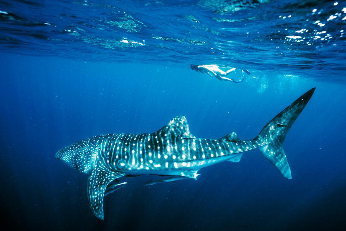 peli pro team david ochoa shark photography
