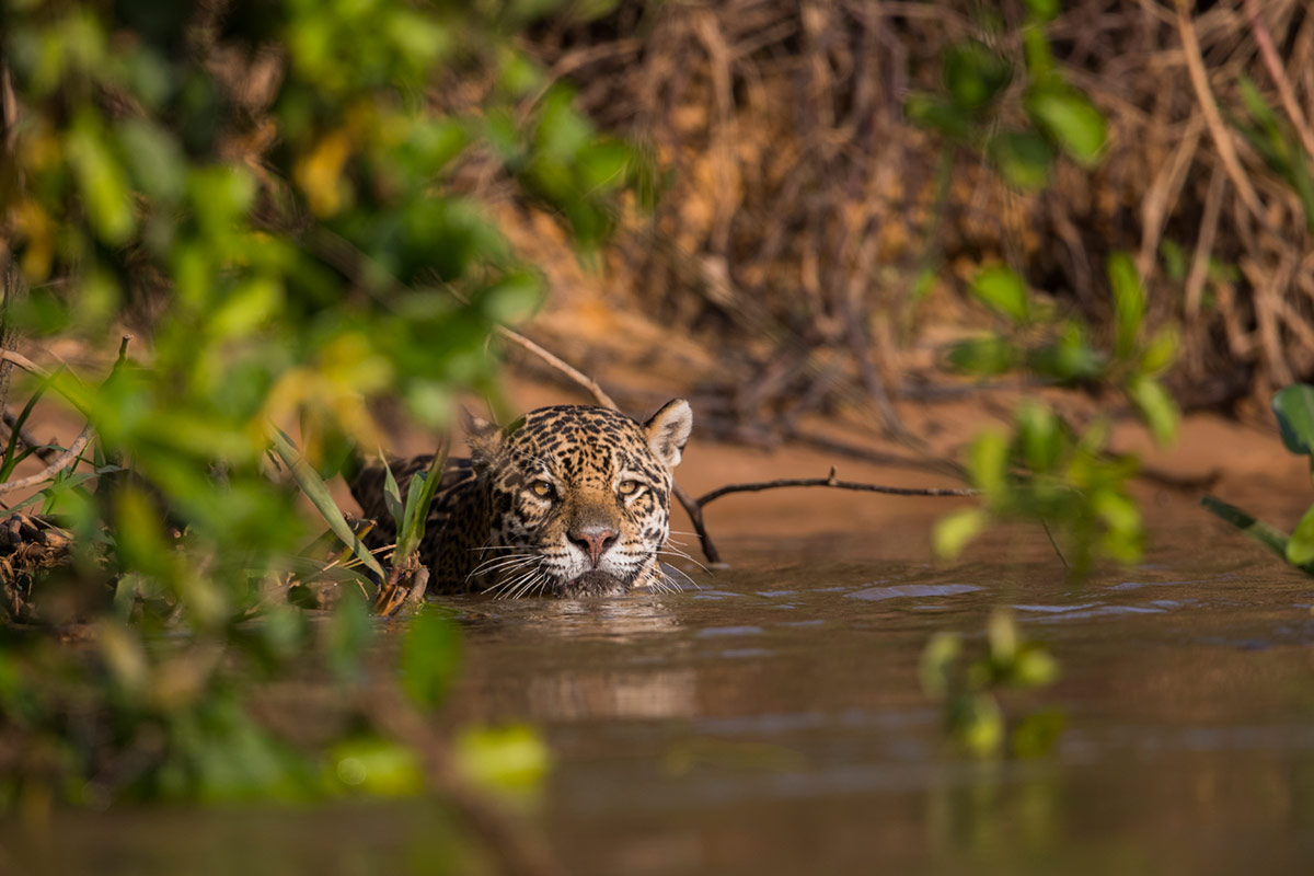 peli pro team thorsten milse endangered species photographer